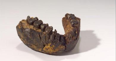 Unterkiefer eines 2,4 Millionen Jahre alten Homo rudolfensis, Fundstätte Uraha nahe des Malawisee - Copyright: Hessisches Landesmuseum
