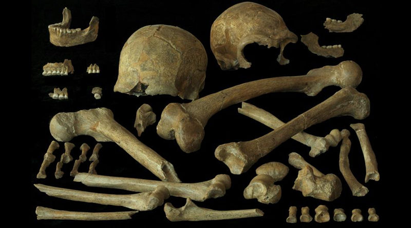 Die Analyse von Knochen aus Spy gab Aufschluss über Ernährung und Mobilität der dortigen Neandertaler. Foto: Royal Belgian Institute of Natural Sciences (RBINS)