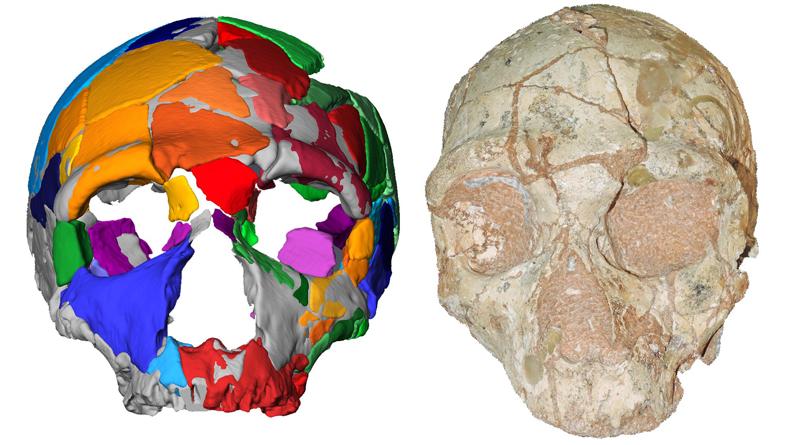 Der Apidima 2 Schädel (rechts) und seine Rekonstruktion (links). Apidima 2 zeigt für Neandertaler charakteristische Merkmale. - Abbildung: Katerina Harvati,