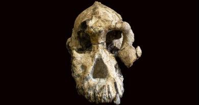 Älteste bekannte Australopithecus-Art hat jetzt ein Gesicht