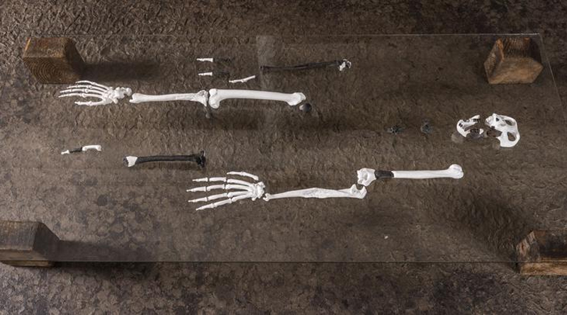 Aus den Fossilien rekonstruierte das Team den Aufbau weiterer Knochen. - Foto: Christoph Jäckle