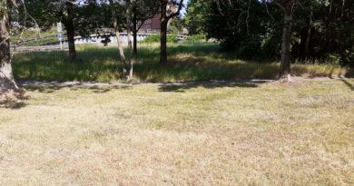 Trockenheit: Stadt muss jetzt schon Bäume wässern
