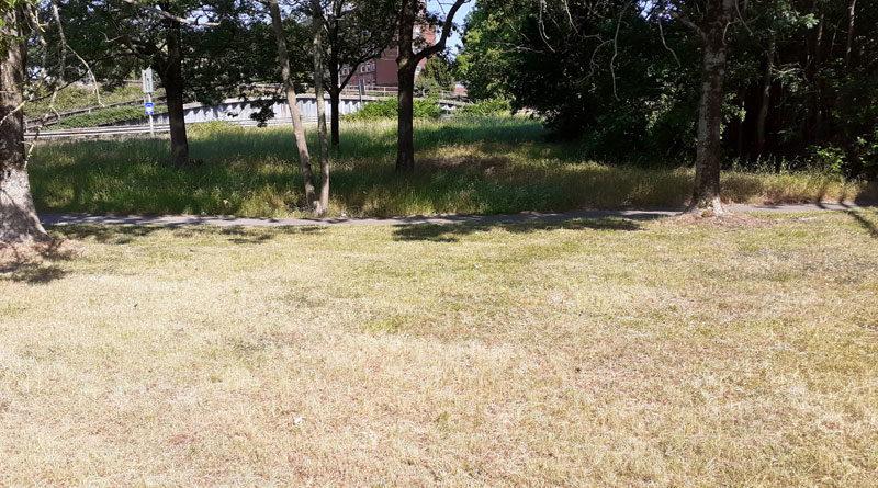 Trockenheit: Stadt muss schon Bäume wässern