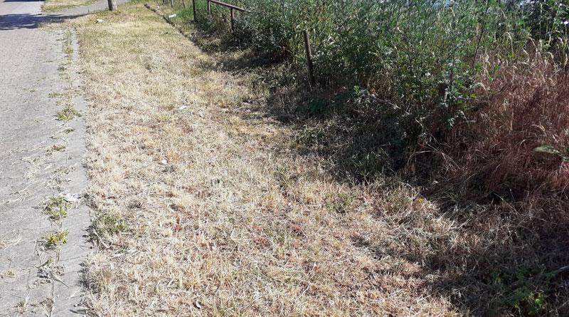 Vertrocknete Wiesenflächen an Gehwegrändern