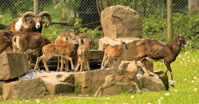 11 Apr 2021 Archivbild: Jungtiere im Wildpark © Landeshauptstadt Düsseldorf/Gartenamt